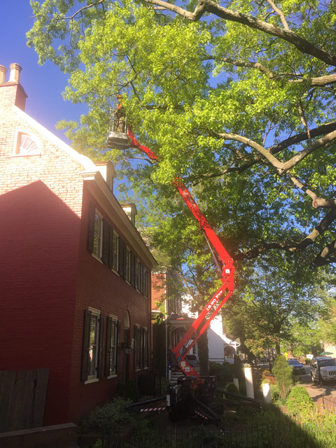 South Jersey Tree Removal